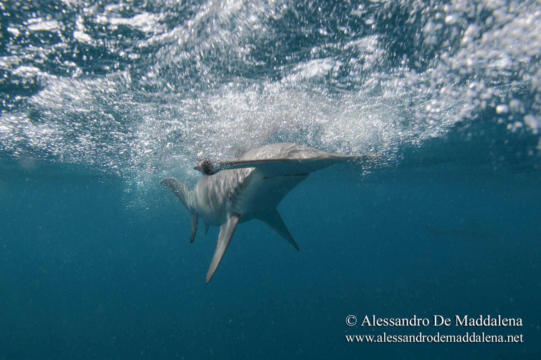 que faire si on rencontre un requin